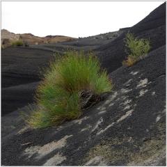 vulkanlandschaft-san-raffael20